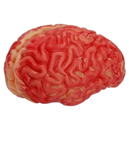 Blutiges Gehirn ca. 13x11cm